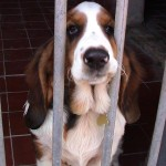 How to Keep Dogs Healthy in a Kennel Environment